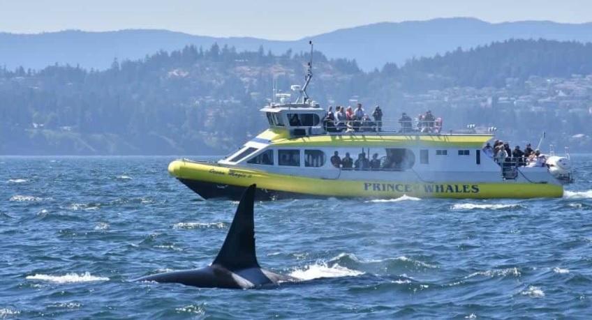 ванкувер наблюдение за китами