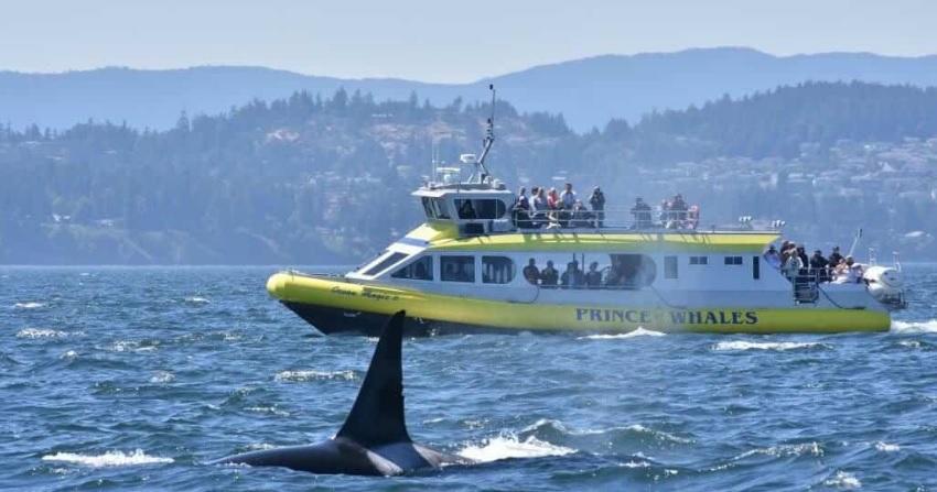 экскурсии ванкувер киты