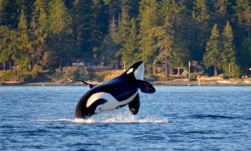 киты ванкувер